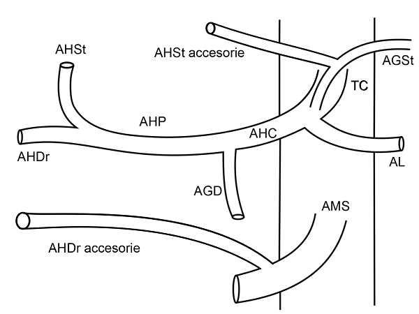 Anatomia arteriala hepatica tip VII